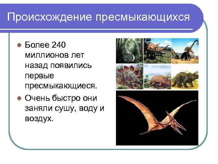 Происхождение пресмыкающихся  l Более 240  миллионов лет  назад появились  первые