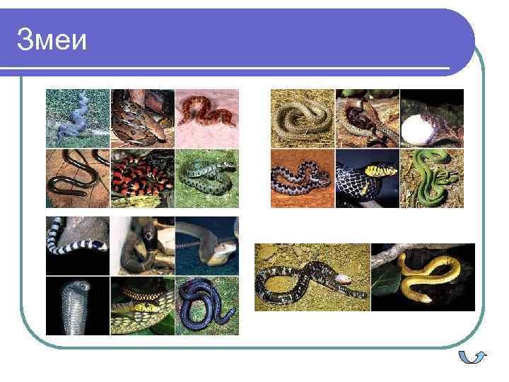 >Змеи