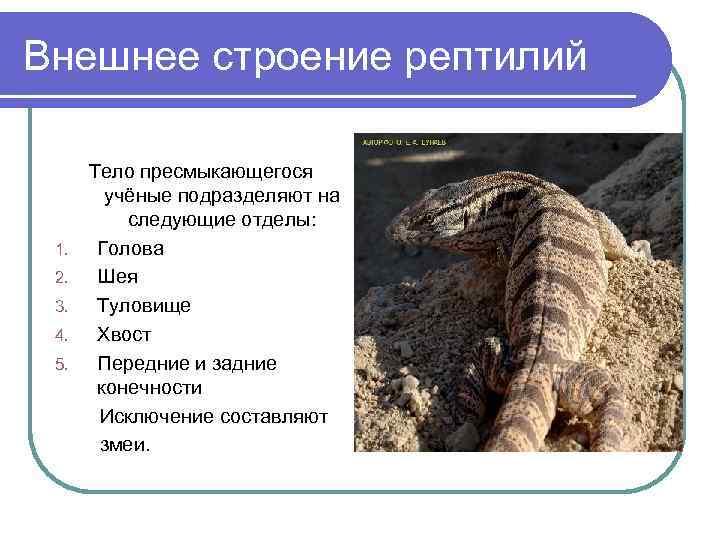 Внешнее строение рептилий  Тело пресмыкающегося   учёные подразделяют на  следующие отделы:
