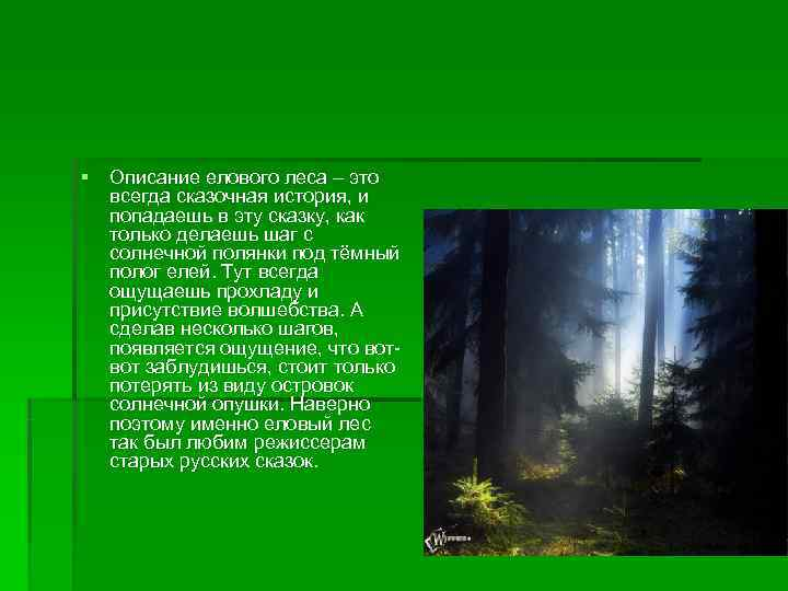 § Описание елового леса – это  всегда сказочная история, и  попадаешь в