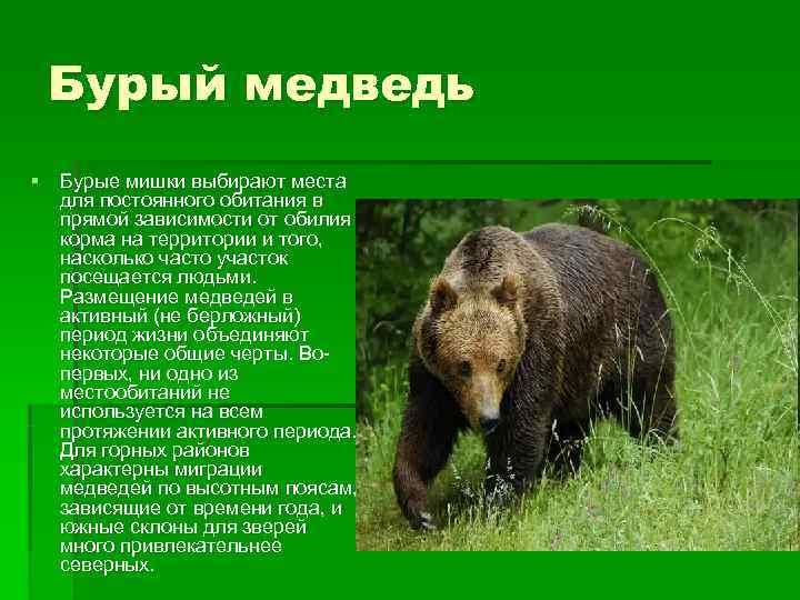 Бурый медведь § Бурые мишки выбирают места  для постоянного обитания в