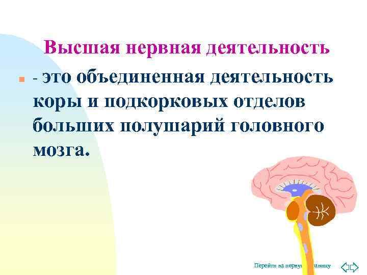 Высшая нервная деятельность n  - это объединенная деятельность коры и подкорковых отделов