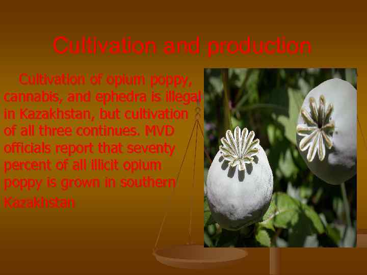 Cultivation and production  Cultivation of opium poppy, cannabis, and ephedra is