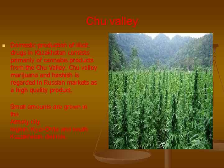 Chu valley n  Domestic production of illicit drugs