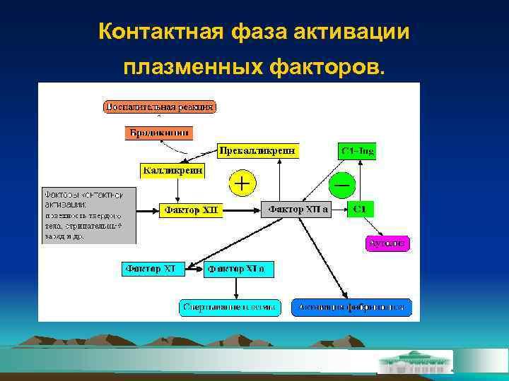 Контактная фаза активации плазменных факторов.