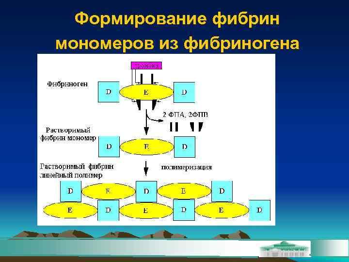 Формирование фибрин мономеров из фибриногена