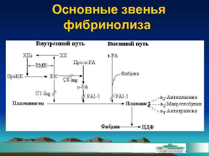 Основные звенья фибринолиза