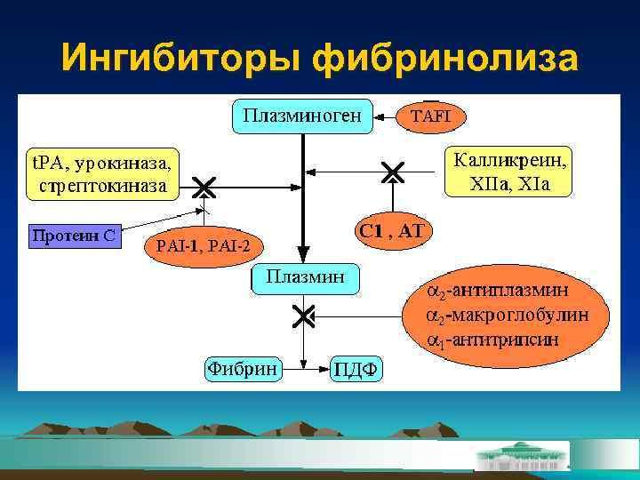 Ингибиторы фибринолиза
