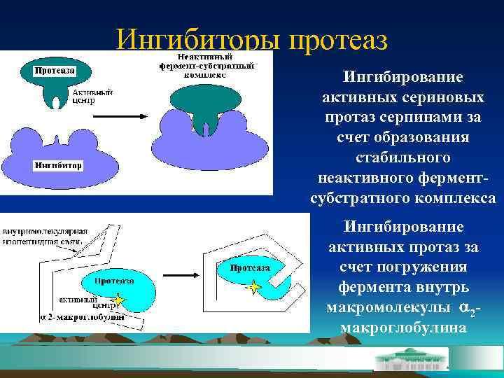 Ингибиторы протеаз    Ингибирование    активных сериновых