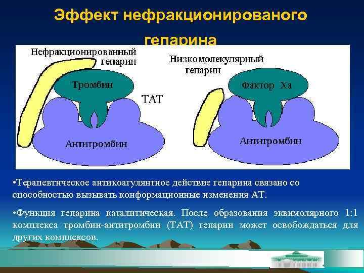 Эффект нефракционированого     гепарина • Терапевтическое антикоагулянтное действие гепарина