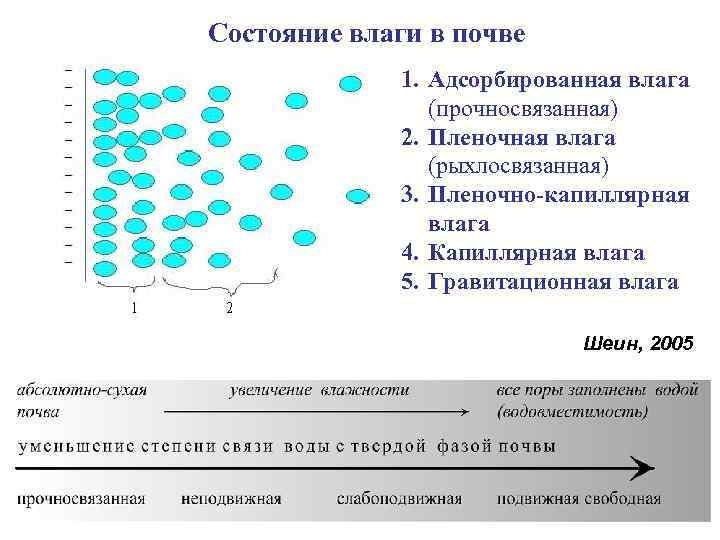 Состояние влаги в почве    1. Адсорбированная влага   (прочносвязанная)