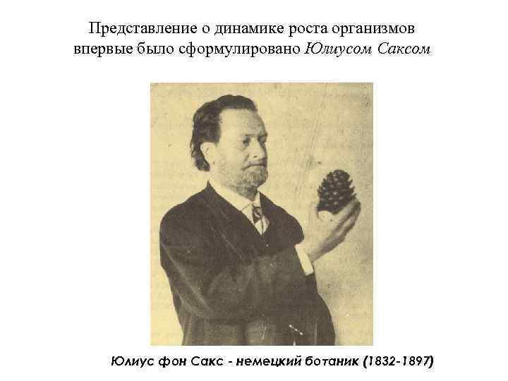 Представление о динамике роста организмов впервые было сформулировано Юлиусом Саксом   Юлиус