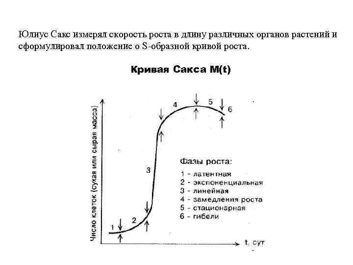 Юлиус Сакс измерял скорость роста в длину различных органов растений и сформулировал положение о