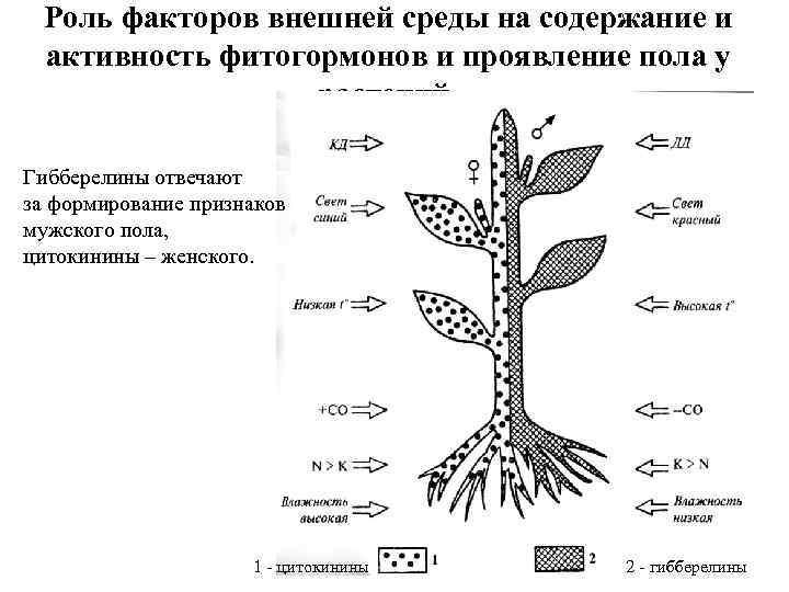 Роль факторов внешней среды на содержание и активность фитогормонов и проявление пола у