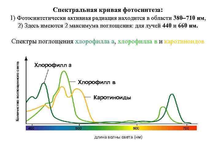 Спектральная кривая фотосинтеза: 1) Фотосинтетически активная радиация