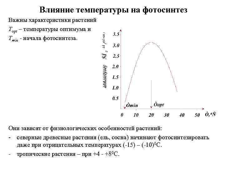 Влияние температуры на фотосинтез Важны характеристики растений Тopt – температуры оптимума