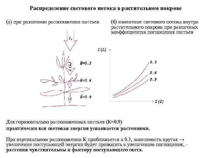 Распределение светового потока в растительном покрове (а) при различном расположении листьев