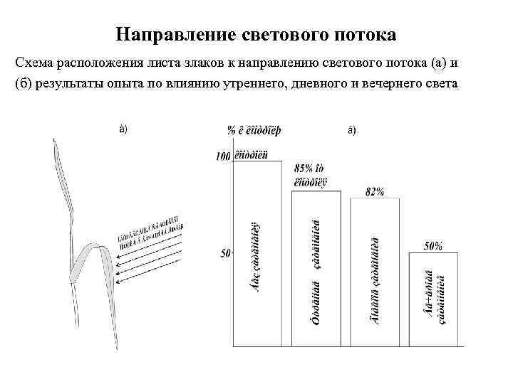 Направление светового потока Схема расположения листа злаков к направлению светового