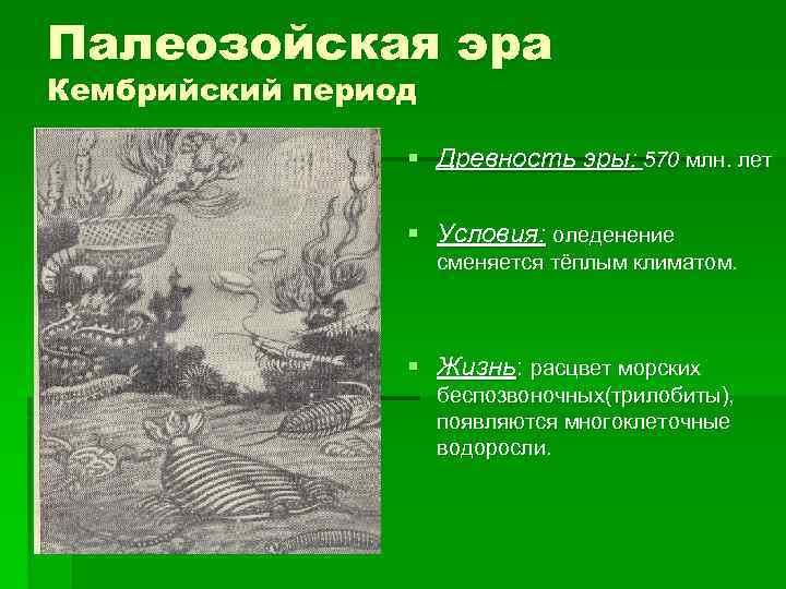 Палеозойская эра Кембрийский период    § Древность эры: 570 млн. лет