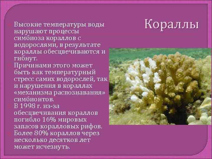 Высокие температуры воды нарушают процессы      Кораллы симбиоза