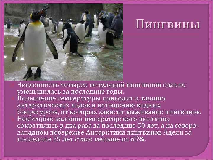 Пингвины  Численность четырех популяций пингвинов сильно уменьшилась за последние