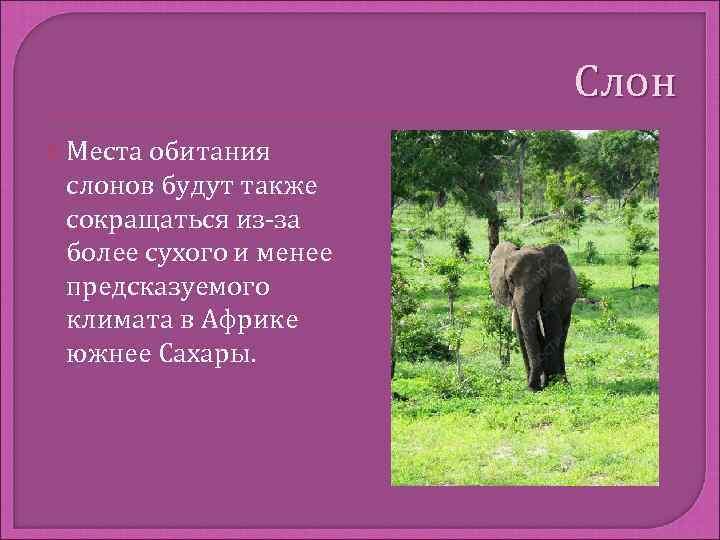 Слон  Местаобитания слонов будут также сокращаться из-за более сухого