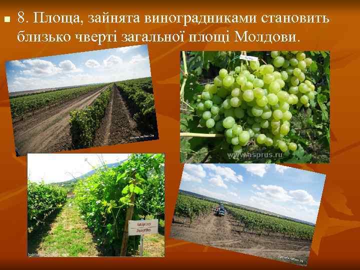 n  8. Площа, зайнята виноградниками становить близько чверті загальної площі Молдови.