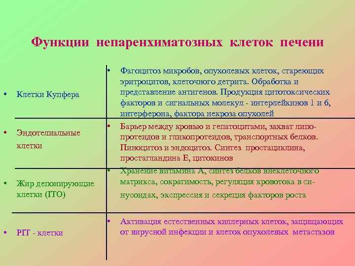 Функции непаренхиматозных клеток печени     •  Фагоцитоз микробов,