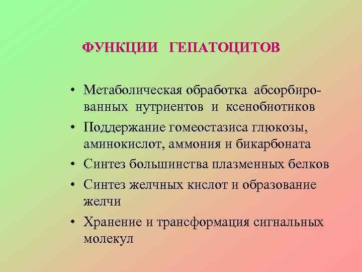 ФУНКЦИИ ГЕПАТОЦИТОВ  • Метаболическая обработка абсорбиро-  ванных нутриентов и ксенобиотиков •