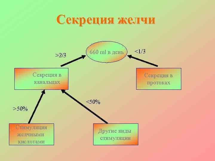 Секреция желчи     660 ml в день