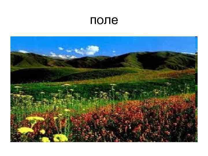 >поле
