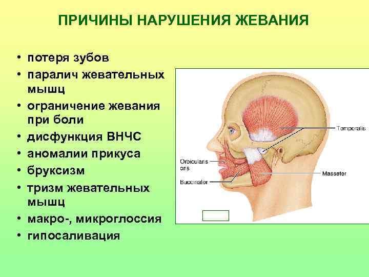 ПРИЧИНЫ НАРУШЕНИЯ ЖЕВАНИЯ  • потеря зубов • паралич жевательных  мышц •