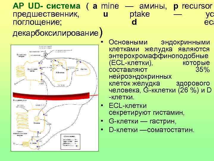 АР UD- система ( a mine — амины,  p recursor