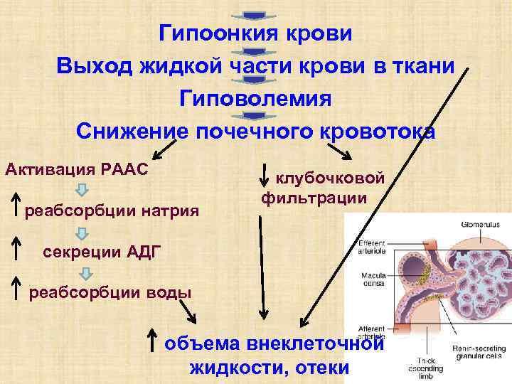 Гипоонкия крови Выход жидкой части крови в ткани    Гиповолемия