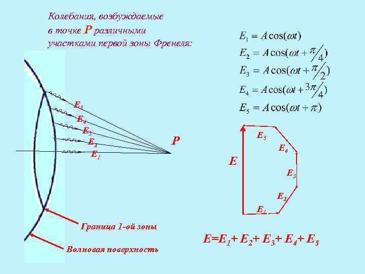 Колебания, возбуждаемые в точке Р различными участками первой зоны Френеля:  E 5 E