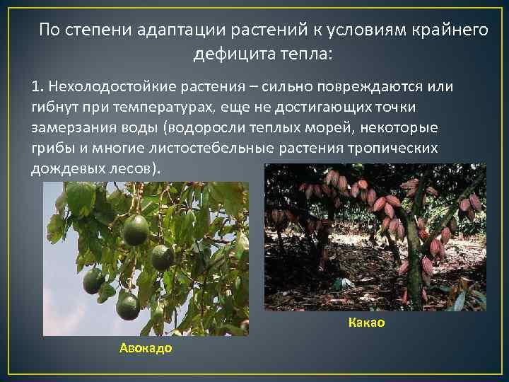 По степени адаптации растений к условиям крайнего   дефицита тепла: 1. Нехолодостойкие растения