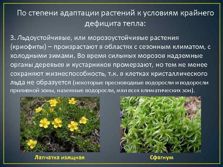 По степени адаптации растений к условиям крайнего    дефицита тепла: 3.