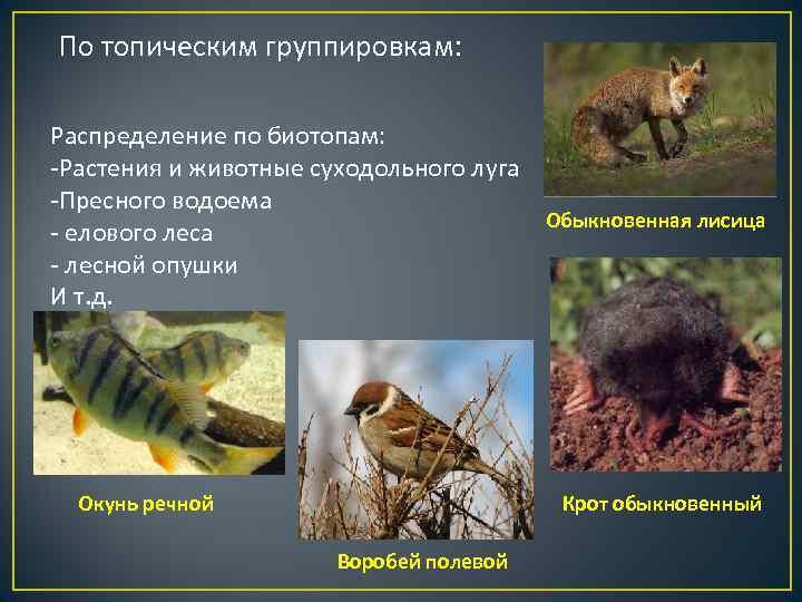 По топическим группировкам:  Распределение по биотопам: -Растения и животные суходольного луга -Пресного водоема