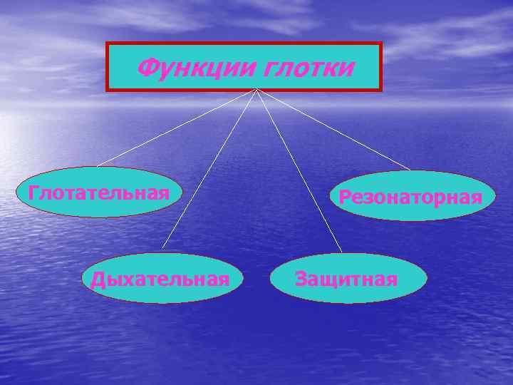 Функции глотки  Глотательная   Резонаторная   Дыхательная  Защитная