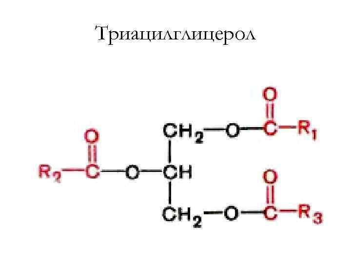 Триацилглицерол