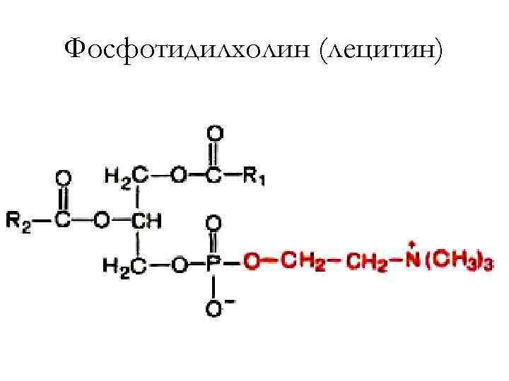 Фосфотидилхолин (лецитин)
