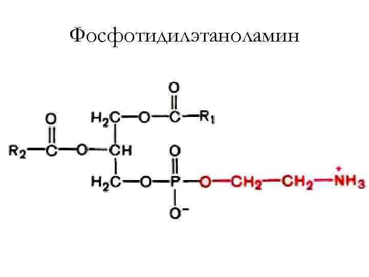 Фосфотидилэтаноламин