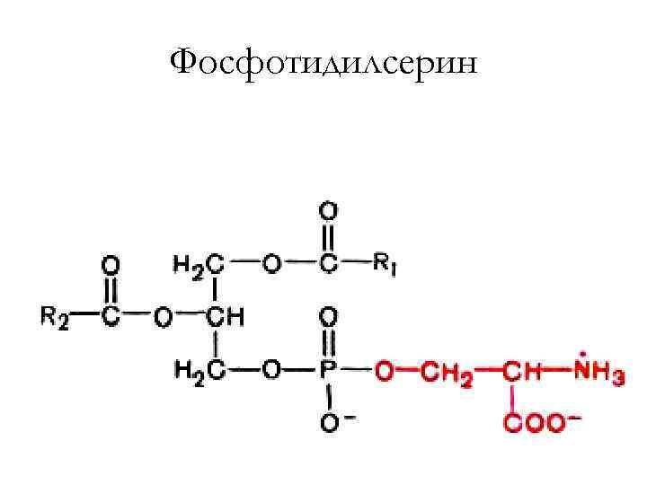 Фосфотидилсерин