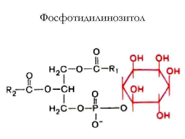 Фосфотидилинозитол