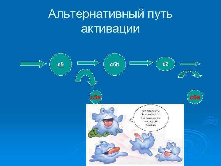 Альтернативный путь активации  с5 b  c 6  с5 а