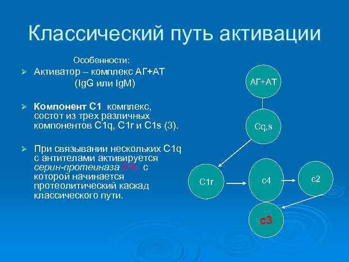 Классический путь активации   Особенности: Ø  Активатор – комплекс АГ+АТ