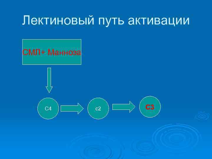 Лектиновый путь активации СМЛ+ Манноза   С 4   с2  С