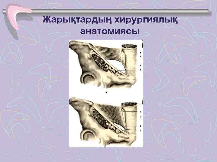 Жарықтардың хирургиялық  анатомиясы