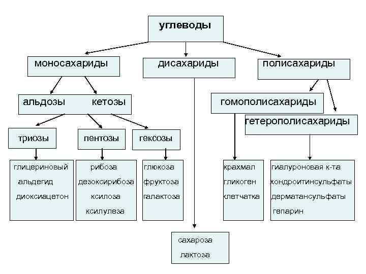углеводы  моносахариды   дисахариды