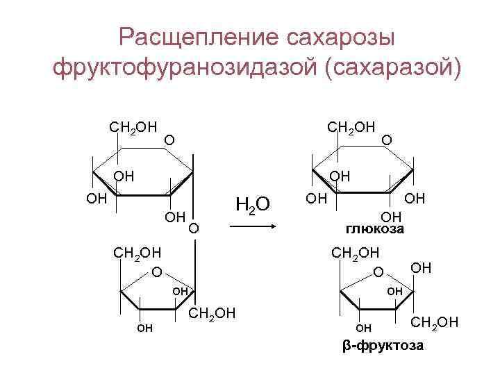 Расщепление сахарозы фруктофуранозидазой (сахаразой)   СН 2 ОН   О
